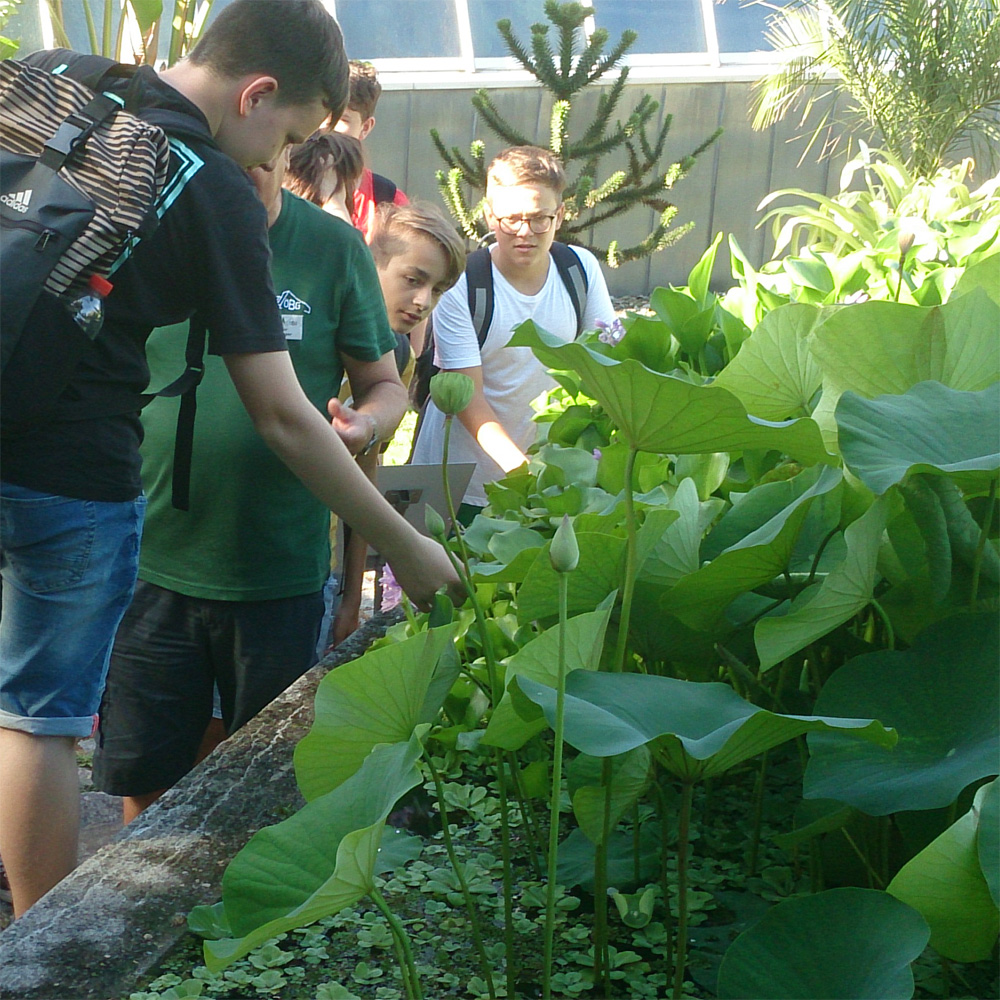 Blog - 201819 Besuch botanischer Garten Bild 3