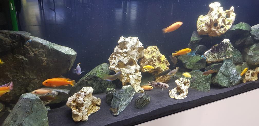 Blog - 201920 AquariumNachwuchs Bild 1