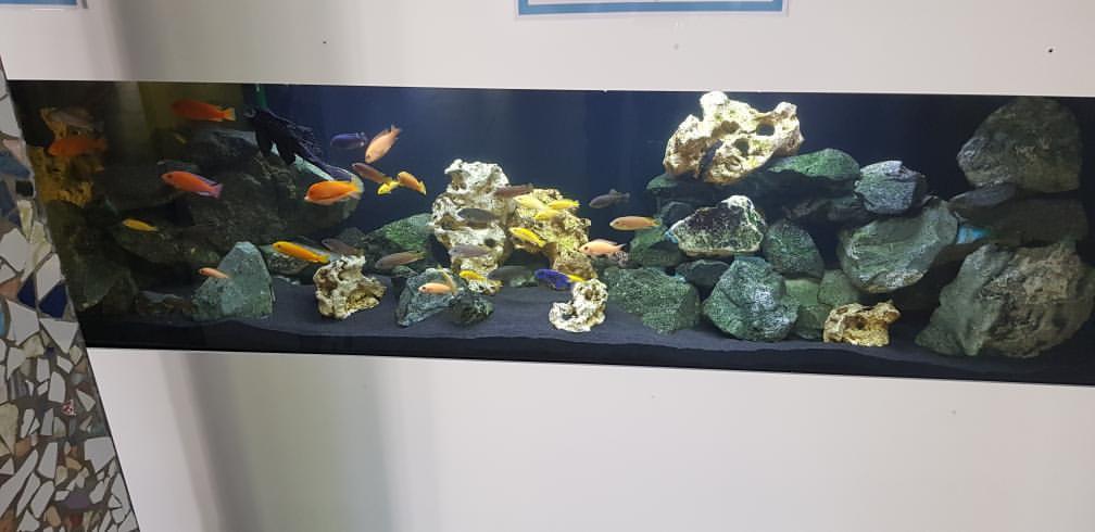 Blog - 201920 AquariumNachwuchs Bild 5