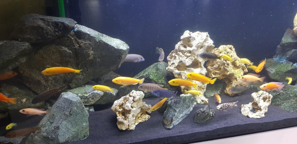 Blog - 201920 AquariumNachwuchs Bild 6