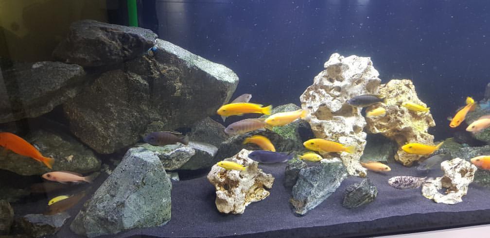 Blog - 201920 AquariumNachwuchs Bild 7